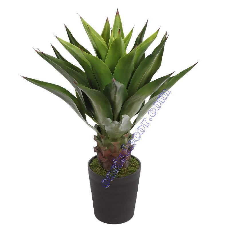 Foto de www.oasisdecor.com - Decoración con plantas